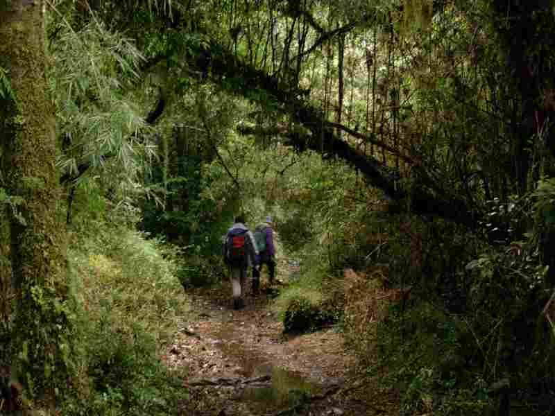 Parque Nacional Alerce Andino: Am Beginn der Carretera Austral nahe der Ortschaft Chamiza ist die Abzweigung zum Alerce Andino Nationalpark. . Mit ca. 40.000ha ist er das größte noch existierende Gebiet mit Valdivianischem Urwald, dem artenreichsten Nebelregenwald der Welt. Die Namensgeber des Parks, die Alerce-Bäume, sind gigantische Koniferen, verwandt mit dem kalifornischen Redwood. Die  ältesten von ihnen schätzt man  auf etwa 3600 Jahre.